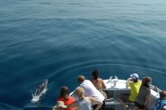 dauphins-bleu-blanc-6-rencontre-mediterranee-villefranche-sur-mer-nice-antibes-cannes